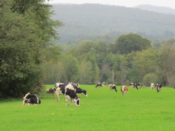 dairy is a leader in food sustainability