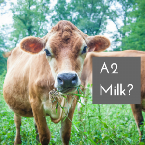 What's A2 Milk?