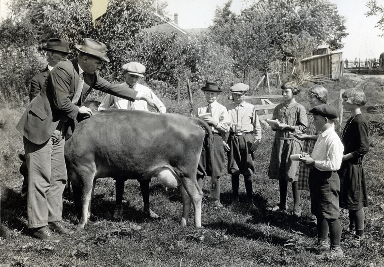 students with cows