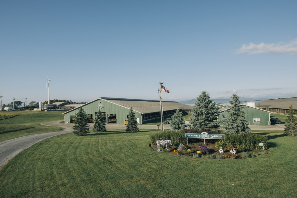 Blue Spruce Farm Vermont