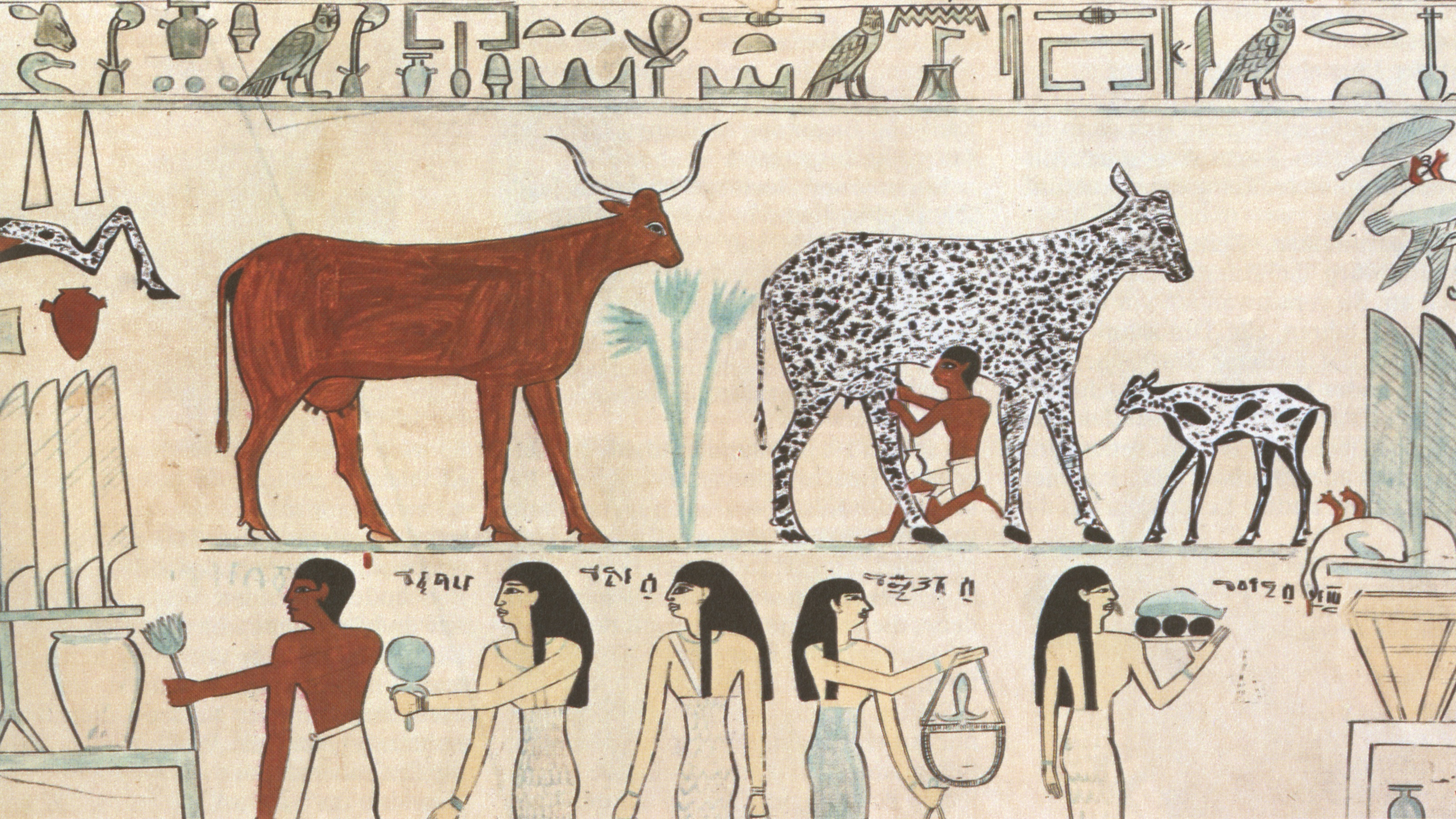 Egyptians milking cows