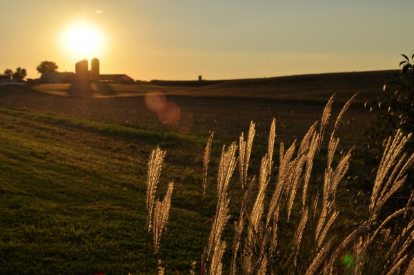 Farm Scene at Sunset 2