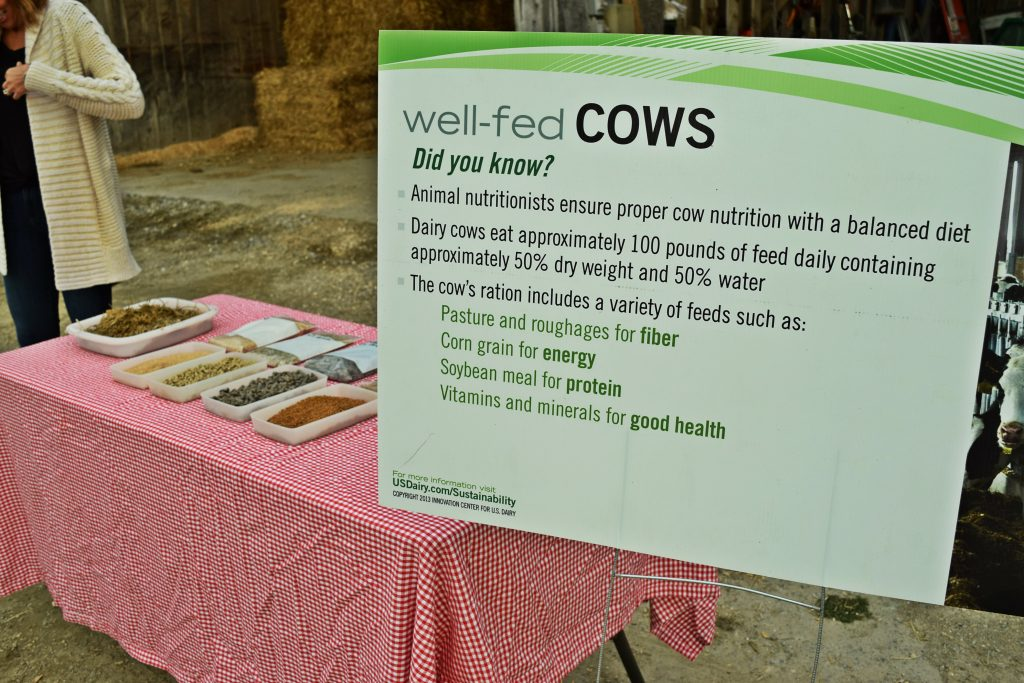 what cows eat farm to table dinner