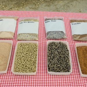 Dairy Cows – The Ultimate Recyclers!