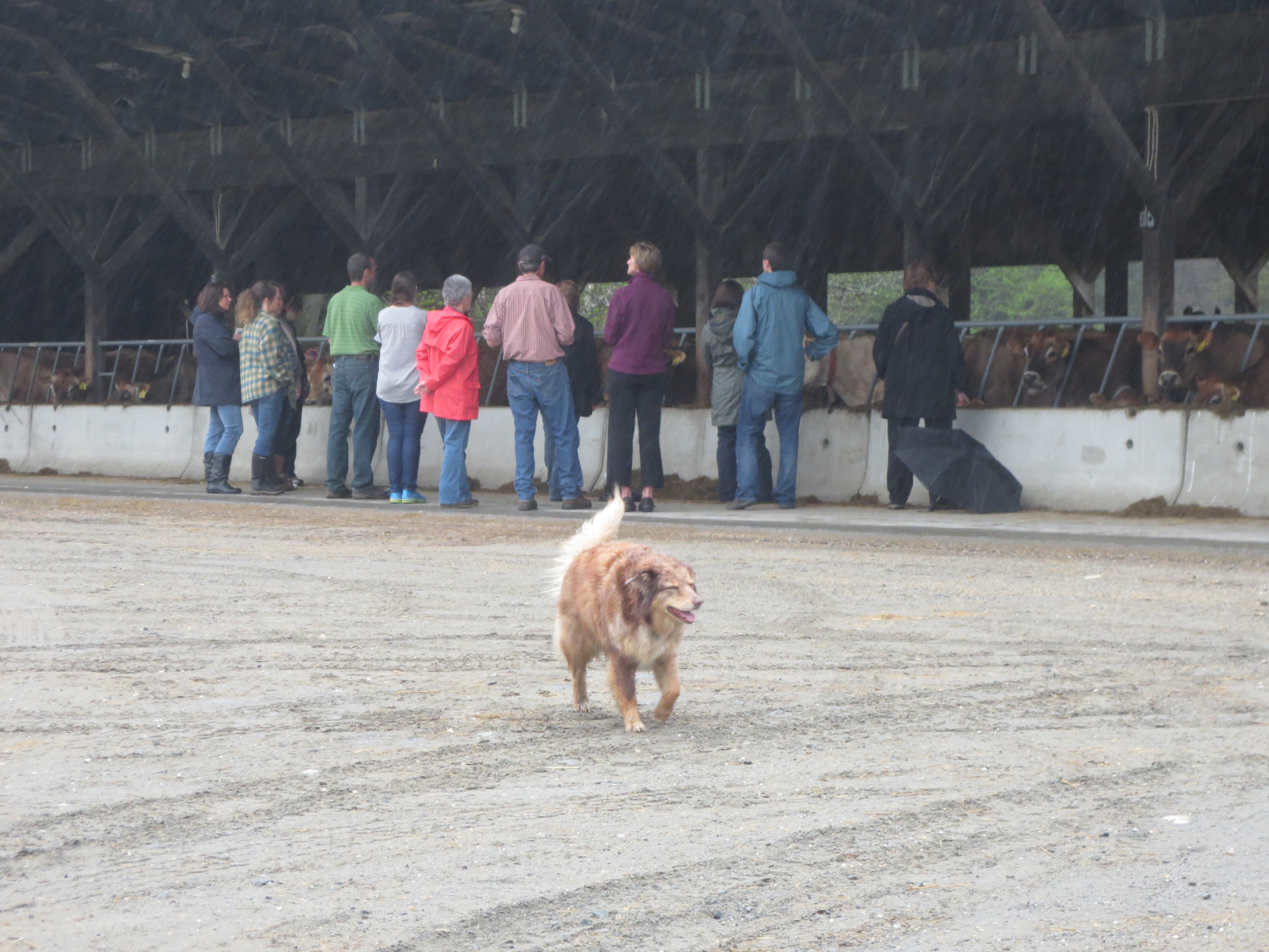 You'll find all kinds of friends on the farm!