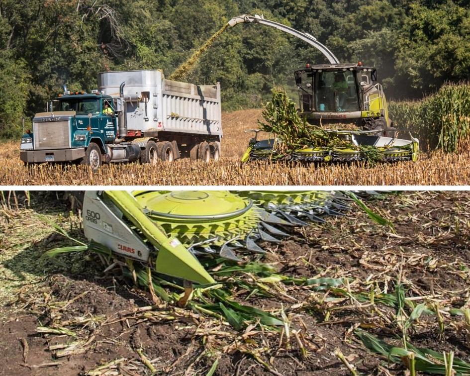 Oakridge dairy corn harvest