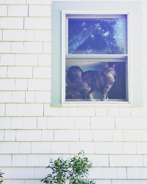 My Cape cat, Bootsy.
